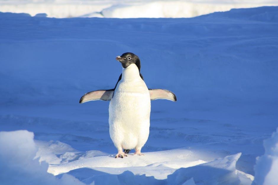 Proč se nořit do ledové vody aneb zkušenosti věčně zmrzlé holky s otužováním dle Wima Hofa